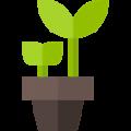 plant (1)